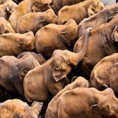 Orfanato de elefantes, Sri Lanka. Fotógrafo: Yashani Shantha.