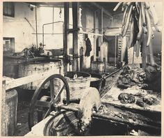 Bubonic Plague in Sydney Sutton Forest Butchery. No. 761 George street from Views taken during Cleansing Operations, Quarantine Area, Sydney, 1900