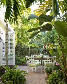 These large bananas, surround an urn filled with bird of paradise. The smaller pots are filled with ferns and begonias.