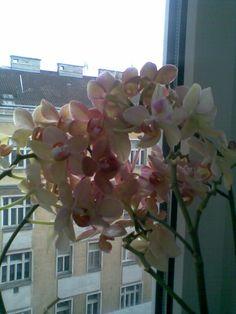 Üppig!!! Plants, Orchids, Plant, Planting, Planets