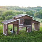 Boomer & George Dual-Use Rabbit Hutch Chicken Coop