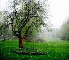 239 Best Rainy Days Images In 2019 Rain Days Rain Drops Rainy Mood