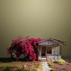 Niland, California photographer Ed Freeman