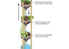 The miniponics system is a cute little one, attracting a lot of attention from visitors. Read here how you can build it yourself.