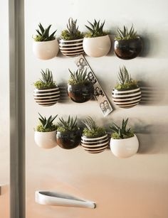 Growing Succulents in Containers: Gardener's Supply Classic Mini Magnet Succulent Garden, Set of 3 Succulent Gardening, Planting Succulents, Planting Flowers, Indoor Gardening, Organic Gardening, Growing Succulents, Succulents In Containers, Diy Garden, Garden Care