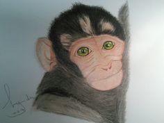 Baby Macaque coloured pencil drawing by Lynda Colley Originals