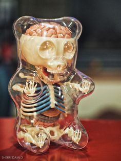 Anatomy of a gummy bear... This shit ain't right.