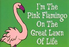 Pink Flamingo                                                                                                                                                      More