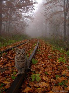 "** ""Nitetime in Switchin' Yard; de trains run bof ways."""