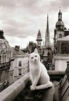 Raphael Vavasseur Art : Un gato en el techo de Normandia.