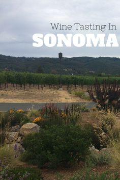 Heading to Sonoma? Looking for where to go. Check out two of my favorite wineries with unique tasting experiences.