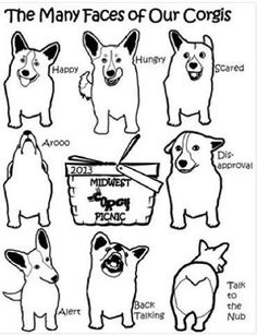 The many faces of corgi