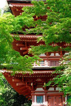Red and Green in Zyoruri-ji Temple, Kizugawa, Kyoto, Japan