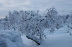 Lapland covered in snow