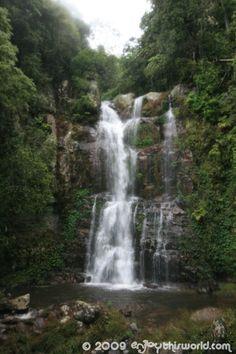 Minnamurra Rainforest, NSW, Australia.  A woderfull experience in the Blue mountains.