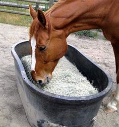 Freedom Feeder Full Bale Slow Feed Net Freedom Feeder Full Bale Slow Feed Net at Mary's is a horse 3 Hay Feeder For Horses, Horse Feeder, Equestrian Outfits, Equestrian Style, Equestrian Fashion, Tallit, Horse Stables, Horse Barns, Horse Paddock