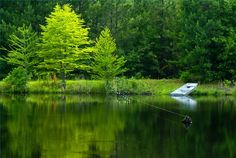 How to Build a Backyard Fish Pond for Walleye and Perch