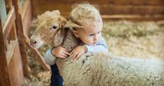 Tomorrow is Hug A Sheep day! What's your favorite farm animal?