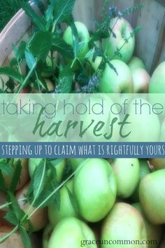 Have you ever felt like you work hard but the harvest never comes? Or perhaps the harvest is upon you but you can't quite reach it's fruit? It could be that you're in the middle of a harvest but you're not taking hold of it. Find out what you need to take hold of what is rightfully yours.