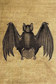 Instant Download Bat Vintage Illustration  Download and by room29