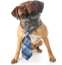 August 5th is #WorkLikeADog Day! Dedicated to the devoted and hardworking people and pets everywhere! #Pets