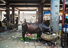 India / ©Jonathan Meter Photography