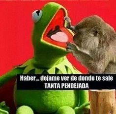 Meme de la Rana Rene Funny Picture Quotes, Funny Photos, Mexican Jokes, Funny Note, Funny Memes, Hilarious, Humor Mexicano, Everyday Quotes, Kermit The Frog