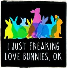 I freaking love bunnies! Funny Bunnies, Baby Bunnies, Cute Bunny, House Rabbit, Bunny Rabbit, Bunny Quotes, Dwarf Bunnies, Bunny Care, Honey Bunny