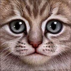 Warrior Kitten - Lilac Tabby by Wynnyelle on DeviantArt