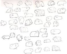daisyhillyardillustration:  I have lots of guinea pigs to draw. I'm learning all about them as I go along. Kinda loving it!   Talented guinea pig artist!