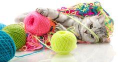 hermoso-gatito-jugando-con-bolas-de-estambre-cute-little-kitten-.jpg (1600×845)