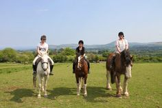Horse Riding in Ireland: Killegar Stables