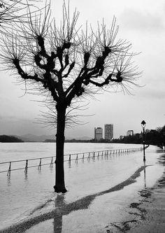 Floody Rhine, Bonn, Germany | Flickr - Fotosharing!