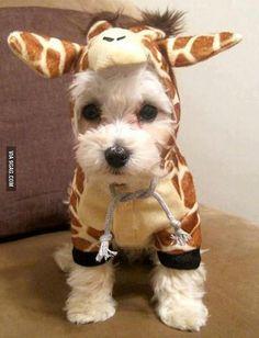 Perro disfrazado de jirafa.