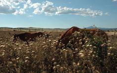 Caballos en el verano alcarreño. Guadalajara. España. Foto de #ignacioklindworth 2007.