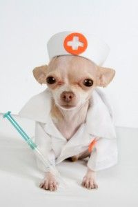 Best medical websites for your pets