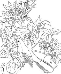 Picture Of Florida State Flower - Beautiful Flowers ...ADULT COLORING BOOK PAGESMore Pins Like This At FOSTERGINGER @ Pinterest