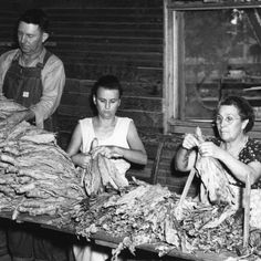 handing tobacco in the barn with the grown-ups.