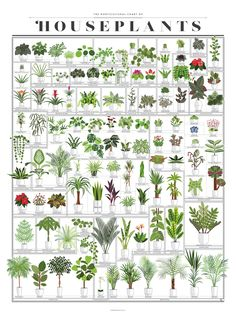 Make your house a little greener with this cheery chart of over a hundred popular potted plants! A veritable horticultural who's who, each leafy friend has been lushly illustrated and labeled with nomenclature both common and scientific. Inside Plants, Room With Plants, House Plants Decor, Plants In Bathroom, Best Plants For Bedroom, Plant Rooms, Types Of Plants, Cactus House Plants, Cactus Art