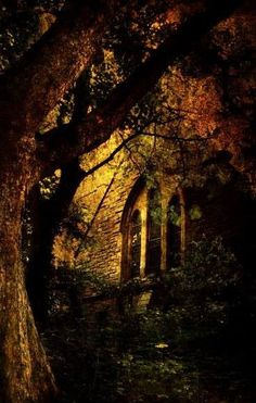 off-with-the-faeries:  ~Realm of the Fae~