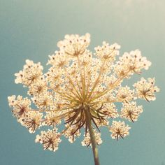 Poster | QUEEN ANNE'S LACE von Cassia Beck | more posters at http://moreposter.de