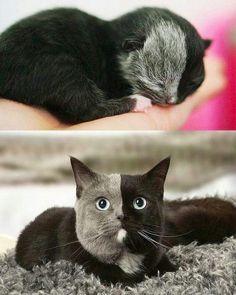 No es bonito, es perfecto - Katzen - Gatos Cool Cats, I Love Cats, Crazy Cats, Cute Funny Animals, Cute Baby Animals, Animals And Pets, Funny Cats, Animal Babies, Nature Animals