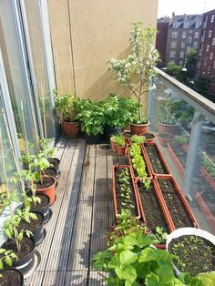 Gardening in the city! #gargden #balcony #cityliving