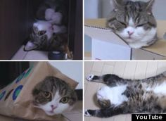 """video from YouTube~ Maru, the cat who never met a box he couldn't fit in, turns a ripe five-years-old today, but he hasn't lost a step. In his latest video, appropriately named """"I Am Maru 4"""", we see the famous Japanese kitty up to all of his usual tricks: diving into boxes, poking his head through shopping bags, playing with toys, and just generally being lovably chilled out."""