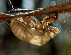 Cicada Shell. We have shells in our tree.
