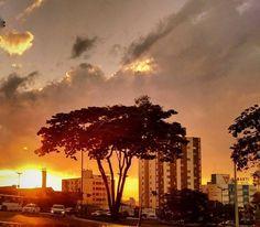 #sunset #sunsets #sunsetlovers #pordosol #nature #natureza #naturegram #twilight #entardecer #crepusculo #silhouette #silhueta #instagramers #instagram #instacool #instapicture #instapic #instamood #urban #urbano #cityscape #curtamais #euamogoiânia #goianianews #igersoftheday #ig_goias #goianiamilgraus #goianiawalk by solirocha http://ift.tt/22uLYoZ