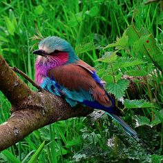 rainbow of birds photos - Google Search
