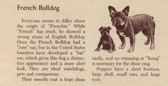 Large collection of antique French Bulldog photographs and collector's cards. Part two features antique French Bulldog photos and kennel advertisements.