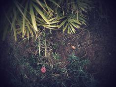 Is a garden