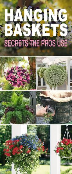 Hanging Baskets : 5 Secrets the Pros Use! • Great tips & secrets that'll help you make your hanging baskets as lush and beautiful as they can be! #hangingbaskets #DIYhangingbaskets #hangingbasketsecrets #hangingbasketmaintenance #careforhangingbaskets #ha